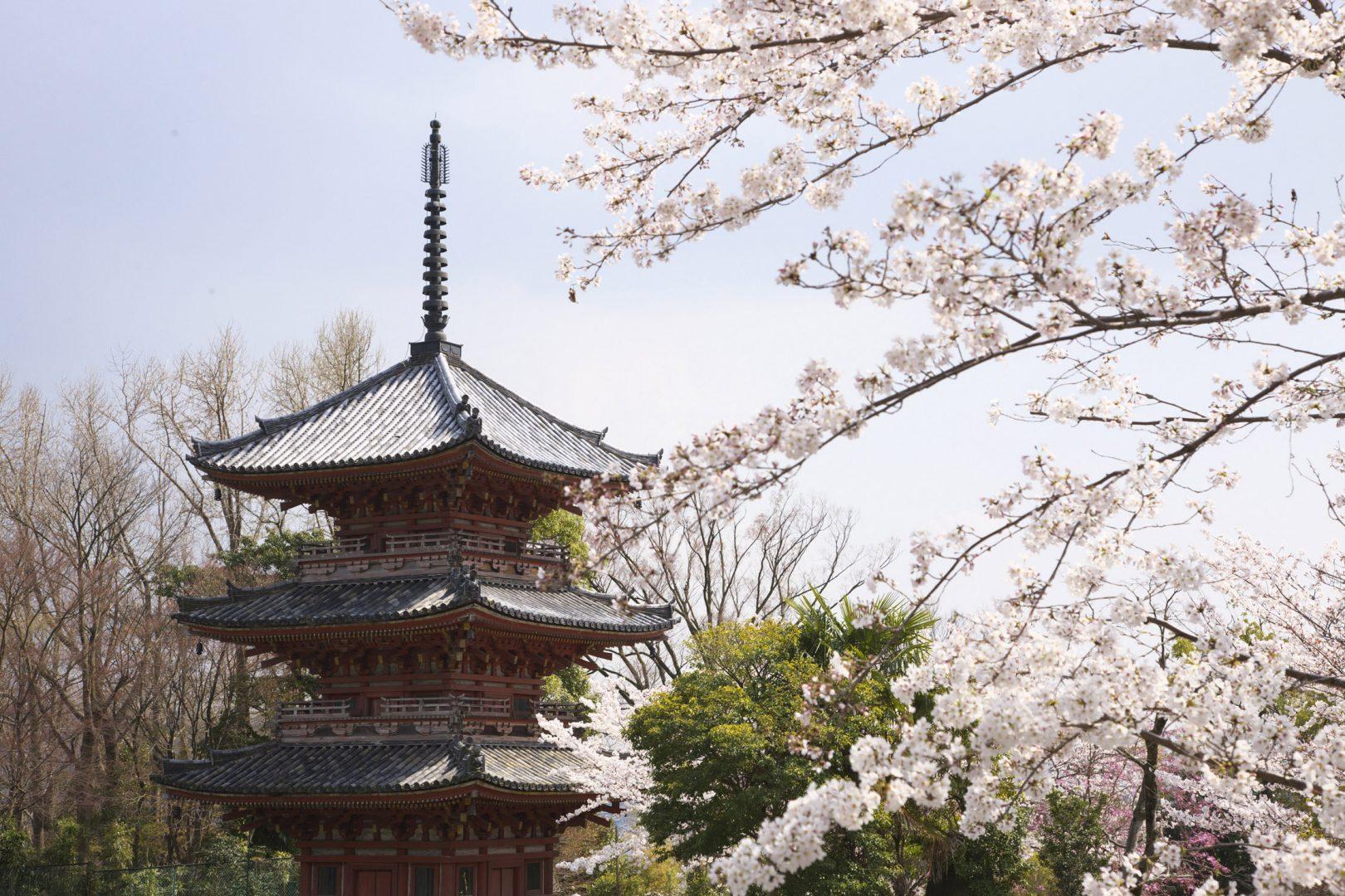 Spring Celebration: Cherry Blossom Festival at Brooklyn Botanical ...